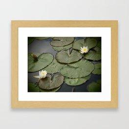 Kenilworth Lotus Framed Art Print