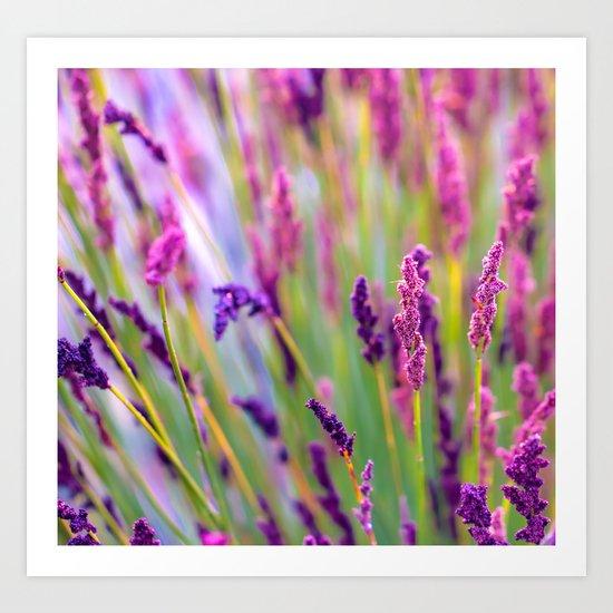 Pink & Purple Art Print