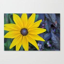 Single rudbeckia beauty Canvas Print