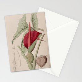 Flower 450 arum orixense Orissa Cuckow point13 Stationery Cards