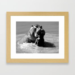 Warring hippos Framed Art Print