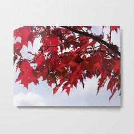 Focusing on Fall: 3 Metal Print
