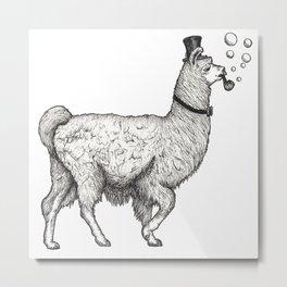 Sir Llama Shortleg (black) Metal Print