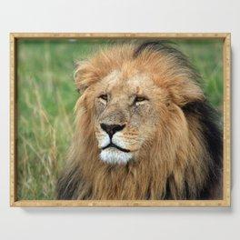 Masai Mara Lion Portrait Serving Tray