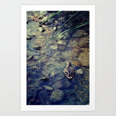 Quack, Quack Art Print