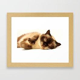 FURRY MEOWDY Framed Art Print