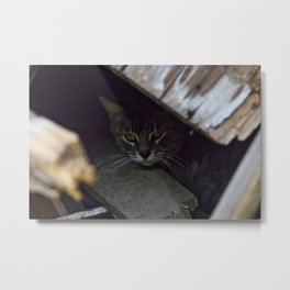 Hiding Cat Metal Print