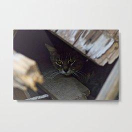 Hiding Cat Metal Print
