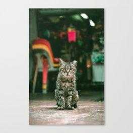 011 - KittyKat Canvas Print