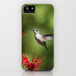 Hummingbird Beauty iPhone Case