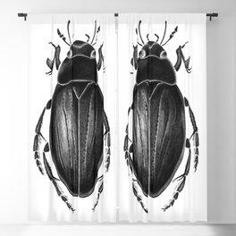 Beetle  07 Blackout Curtain