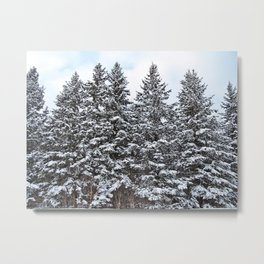Evergreens Dusted in Snow Metal Print