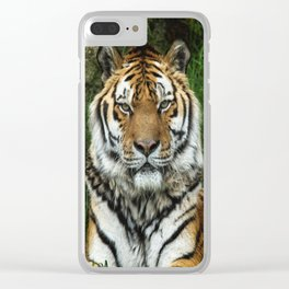 Majestic Fixed Tiger Stare Clear iPhone Case