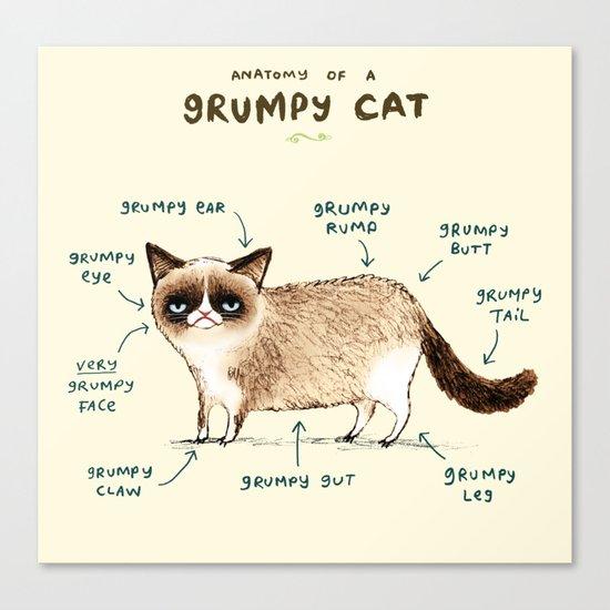 Anatomy of a Grumpy Kitty Canvas Print