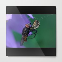Spider Packs The Same Size Fly Metal Print