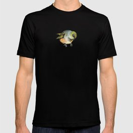Sylvereye - Waxeye bird T-shirt