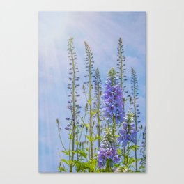 Cornflower Blue and Lavender Foxglove Flowers Canvas Print