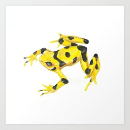 Panamanian Golden Frog Art Print