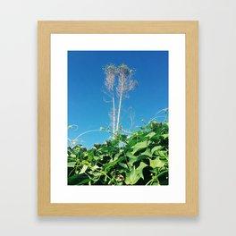 Nature Walk 002 - Plant Tower Framed Art Print