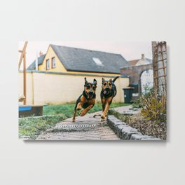Dogs Have Fun At The Garden Metal Print