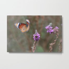 Butterfly Blooms Metal Print