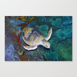 Kemp's Ridley Sea Turtle Canvas Print