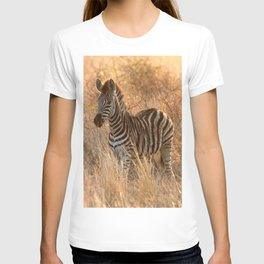 Zebra foal in morning light T-shirt