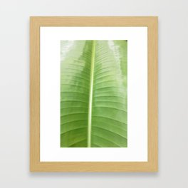 HELICONIA PALM  Framed Art Print