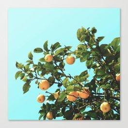 Summer Orange Tree Canvas Print