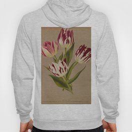 Arendsen, Arentine H. (1836-1915) - Haarlem's Flora 1872 - Single Early Tulips 5 Hoody