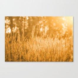 Sunset Grass Field Canvas Print