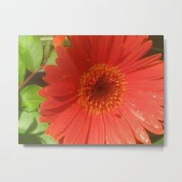 Blood Flower Metal Print