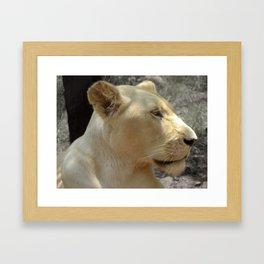 White Lionness Framed Art Print