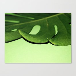 Green with Envy Monstera Canvas Print