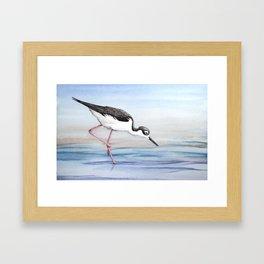 Black-necked Stilt Framed Art Print