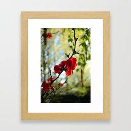 Bold Red Flower Framed Art Print