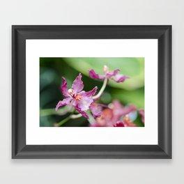 Orchid Beauty (3) Framed Art Print