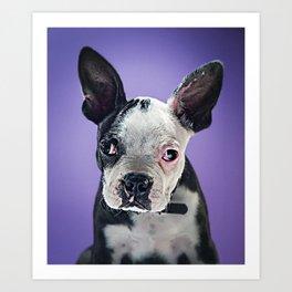 Super Pets Series 1 - Super Bugsy 2 Art Print
