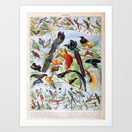 Adolphe Millot - Oiseaux B - French vintage poster Art Print
