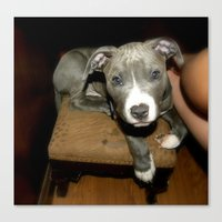 pit bull Canvas Prints featuring Pit Bull by Teresa's Plants & More LLC