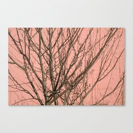 Bare tree against a pink wall Canvas Print