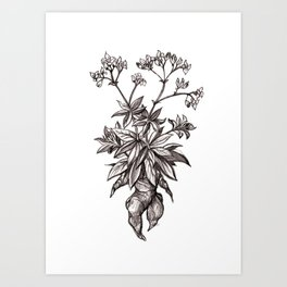Mandragora Officinalis Art Print