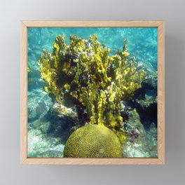 Watercolor Sealife, Fire and Brain Coral 01, St John, USVI, A Feisty and Witty Combination Framed Mini Art Print