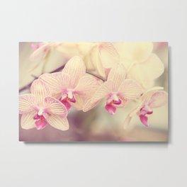 Orchid IV Metal Print