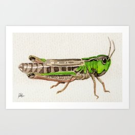 Grasshopper Kunstdrucke