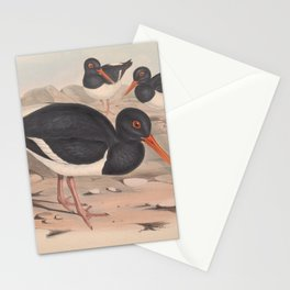 White-breasted Oyster-Catcher, haematopus longirostris3 Stationery Cards