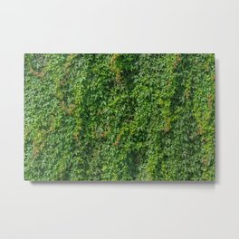 Green vines climbing brick wall plants natural texture Metal Print