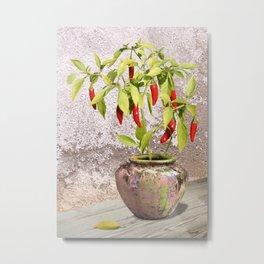 Thai Peppers Metal Print