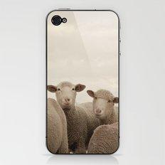 Smiling Sheep  iPhone & iPod Skin