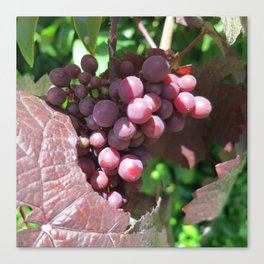 Red Grape 2 Canvas Print
